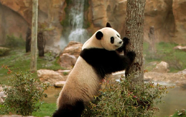 Beauval : dans les coulisses du premier zoo de France - <p>                                                   Plongée en immersion dans les coulisses d'un des 15 plus beaux zoos du monde. </p>