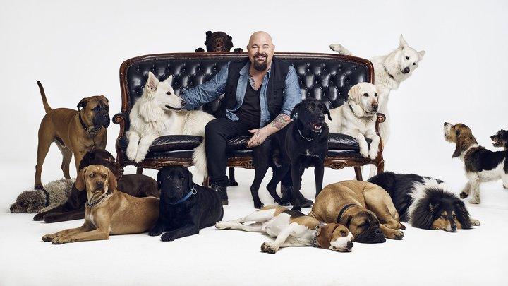 Bagges Hemlösa Hundar - <p>                  Sjuan </p>