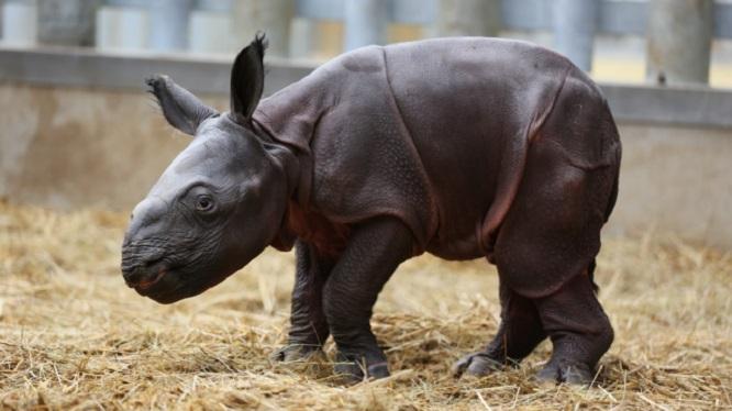 Beauval : dans les coulisses du premier zoo de France
